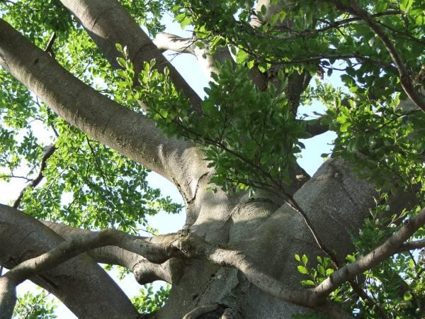 Grundlagen der Baumpflege